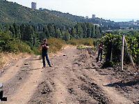Охраняемые виноградники._11
