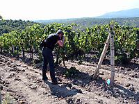 Охраняемые виноградники._7
