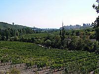 Охраняемые виноградники._8