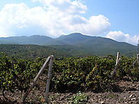 Охраняемые виноградники._9